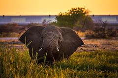 DSC00325 (philliphalper) Tags: namutoni etosha namibia elephant