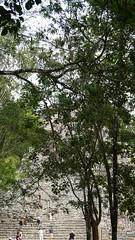 2017-12-07_12-28-11_ILCE-6500_DSC03040 (Miguel Discart (Photos Vrac)) Tags: 2017 60mm archaeological archaeologicalsite archeologiquemaya coba e1670mmf4zaoss focallength60mm focallengthin35mmformat60mm holiday ilce6500 iso100 maya mexico mexique sony sonyilce6500 sonyilce6500e1670mmf4zaoss travel vacances voyage yucatecmayaarchaeologicalsite yucateque