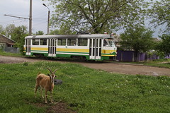 Pyatigorsk - Tram 115 (Ambiance Tram) Tags: pyatigorsk tram tatra