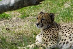 20181209DSC08712 (mchlphlmnn) Tags: afrika africa südafrika southafrica southernafrica westcape gardenroute