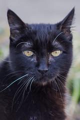 RIP Mr. Kitty - Spring 2000 - 12/22/2018 (Lynn Tweedie) Tags: