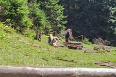 Trip to Mount Kukul-August-2018-12 (pavlo.malyshchak) Tags: travel mountains carpathians ukraine family summer vacation forest
