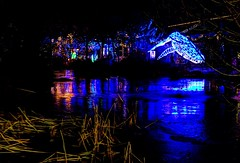 whale blue (JoelDeluxe) Tags: rol riveroflights abq biopark nm december 2018 albuquerque biological park pnm light display colors lights sculptures fantasy newmexico hdr joeldeluxe