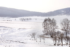 White world (MelindaChan ^..^) Tags: innermongolia china 内蒙古 snow white 雪 tree plant nature chanmelmel mel melinda melindachan 冰 bashang 壩上