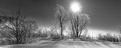 Orleans Island, Quebec, Canada (Tasmanian58) Tags: trees sun star batis 18mm 2818 zeiss orleans island quebec canada bw nb noirblanc blackwhite landscape monochrome sony a7ii simplysuperb