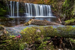 FALLS AND FUNGI (Tony Armstrong-Sly) Tags: landscape water waterfalls river fungi breconbeaconwaterfalls breconbeacons wales autumn moss timber trees nature
