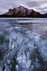 Frozen Abraham (Liping Photo) Tags: lipingphoto jaspernationalpark banffnationalpark winter alberta bubbles ice abrahamlake canada