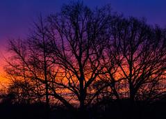 Sunrise, see large (herman hengelo) Tags: sunrise winter garden hengelo thenetherlands silhouets zonsopkomst morgenrood