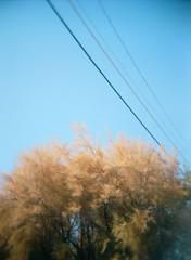 01010012 (JPinNV) Tags: holga portra160 fall colors