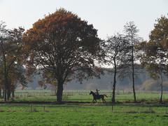 IMG_8859 (Momo1435) Tags: eindhoven brabant waalre herfst herfstkleuren netherlands autumn fall colors