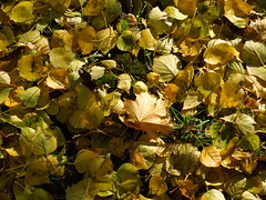Autumn leaves (cloversun19) Tags: rain animal field grass landscape branches leafs foliage sky russia russian spb tree walking country holiday holidays park garden dream dreams positive forest happy view grey legend fairytale fir firtree birch village evening romantic october september car road street blue maple leaves town city light sun yellow autumn trees moss leaf