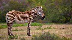 (Geonaut) Tags: dehoopnaturereserve gardenroute gartenrute südafrika za