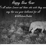 Happy New year thumbnail