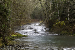 Gray Wolf River 2952 (All h2o) Tags: gray wolf river olympic national park peninsula pacific northwest water forest landscape nature mountains tree trees wood autumn fall season