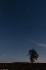 Winter stars (Piotr Potepa) Tags: orion pleyades tree night nightscape nightscapes nightsky poland polska aldebaran m42