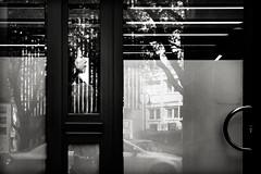 inaudible.melodies (grizzleur) Tags: reflections reflection woman lady profile beautiful urban city street streetphotography candid candidphotography candidstreetphotography lines depth light window throughthewindow trees shiny glass stripe stripes inaudible melody melodies olylove olympus olympusomdem5 olympusm45mmf18 olympusmzuiko45f18 bw mono monochrome frame frameinaframe framed hidden hide find found