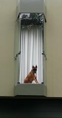 Lima - Parque Naciones Unidas (Santiago Stucchi Portocarrero) Tags: lima perú santiagostucchiportocarrero miraflores perro can cane dog hund chien hound
