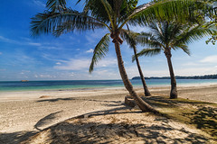 Three palms in Indonesia (world.wideweg) Tags: indonesia beach lagoi bintan asia sun ocean sea sand palms nirwanabeachresort resort hotel privatebeach nopeople perfectbeach holiday vacation trip travel reise