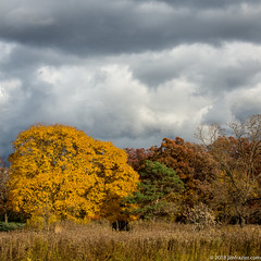 Prairie and Woods (Jim Frazier) Tags: publicgarden 2018 2018cantigny2018 autumn beautiful beauty botanic botanicgarden botanicalgarden botanicalgardens cantigny cantignypark clouds cloudy color copyright dupage dupagecounty fall flora forest gardens horticulture il illinois jimfrazier jimfraziercom landscape leaves museum natural nature november overcast park parks plants prairie preserve q4 restoration scenery scenic sky skyscape square trees wheaton woodland woodlot woods yellow instagram facebook f10