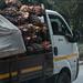 On the  coastal road - harvested palm nuts