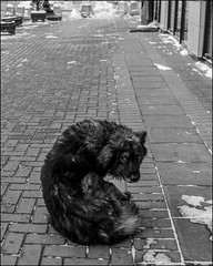 0A77m2_DSC1349 (dmitryzhkov) Tags: russia moscow documentary street life human monochrome reportage social public urban city photojournalism streetphotography people animalsinthecity bw dog pet dmitryryzhkov blackandwhite outdoor everyday candid stranger dogselect selection