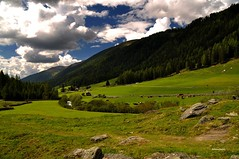 Verdi pascoli (stefano.chiarato) Tags: verde green pascolo mucche prati montagne mountains nuvole clouds valleaurina altoadige trentinoaltoadige italy paesaggio panorami landscape