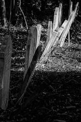 P-00494-No-125_rt_1 (Steve Lippitt) Tags: architecture art graves highgateeastcemetery architectural artistry building burialground cemeteries cemetery edifice edifices fineart gravestone landscape landscaping placeofworship religiousbuilding sculpture statuary statue stonesculpture structures tombstone london england unitedkingdom camera:make=fujifilm geo:country=unitedkingdom geo:state=england geo:lat=51564733333333 exif:aperture=ƒ45 geo:location=highgatecemeteryeastswainslnhighgaten66pj exif:model=xh1 exif:lens=xf50140mmf28rlmoiswr geo:lon=014485 camera:model=xh1 exif:make=fujifilm exif:focallength=1192mm geo:city=london exif:isospeed=200
