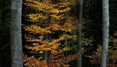 Október színei (Sándor Kéri) Tags: autumn ősz d5100 nikon 1855 kit október colors hungary