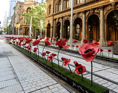 CBD & South East Light Rail - Armistice Day Tribute  -  11 November 2018 (1) (john cowper) Tags: cselr sydneylightrail armisticeday2018 georgestreet gpo martinplace barrackstreet kingstreet altrac transportfornsw poppies flandersfields sydney newsouthwales