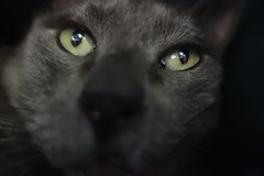Yuba in his House 2 (sjrankin) Tags: 18january2019 edited kitahiroshima hokkaido japan animal cat livingroom closeup dark cathouse yuba blurry