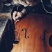 Birth of Cello