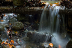 Herbst im Mischwald (Ernst_P.) Tags: aut bach herbst inzing österreich schöfftal tirol toblaten wald wasser sigma macro 50mm f28 autumn fall otoño