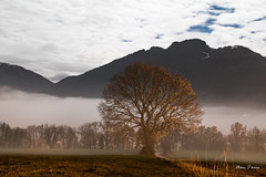 Stratus en Gavot (MarKus Fotos) Tags: stratus brouillard brume fog gavot chablais canon clouds cloud ciel hautesavoie weather meteo alpes alps automne auvergnerhonealpes arbre autumn