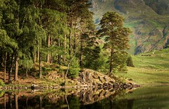 Well Known (Nicks-2017) Tags: bleatarn langdale cumbria lakedistrict reflections green summer tree mountains outdoor nature landscape water lake canon eos nationalpark nationaltrust outside sunlight lush trees forest woods