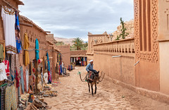 City Express Transport (Jethro_aqualung) Tags: nikon d800e maroc arab mule colors color 35mm jethroaliastullph