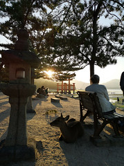 Kyozon suru (bruno carreras) Tags: japon japan nippon isla island miyajima isukushima pagoda templo temple torii senjokaku hatsukaichi miyajimacho ciervo deer shika sol sun sunsen aterdecer puerto budismo budist