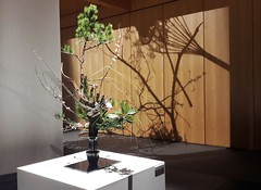 Ikebana exhibition at the MCJP, Paris 15th (Sokleine) Tags: ikebana exhibition exposition musée museum artfloral flowers fleurs composition art culture zen japonisme maisondujapon paris 75015 france heritage tradition light shadow ombres lumières