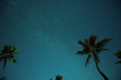 Comet Wirtanen, Gemini Meteor, & the Pleiades DSC_3471NX (jim denny) Tags: comet meteor constellation universe cosmos hawaii coconutpalm pacific kauai stars nightsky