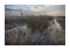 Sunrise Waterdonken Breda 09 (cees van gastel) Tags: ceesvangastel canoneos550d clouds sigma1020mm landscape landschap luchten natuur nature nederland netherlands noordbrabant breda water winter waterdonkenbreda waterakkers wolken sunrise zonsopkomst mist horizon einder