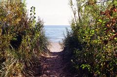 until next summer (.grux.) Tags: asahipentaxsv m42 supertakumar55mmf18 film kodakproimage100 sunnyf16 path sand beach water swim lastswim lakeontario torontoisland toronto