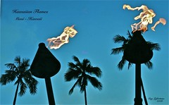 FLAMMES HAWAIIENNE DANS un PARC sur l'ILE de MAUI à HAWAII (Guy Lafortune) Tags: tree trees arbre arbres palm palmier palms palmiers flamme flammes feux fire flames flame blue sky ciel bleu île maui island hawaiian hawaii month april fall mois avril printemps nice weather warm noir black nature naturel natural voyage travel trip vacances holidays ombre shadow clair clear lumineux
