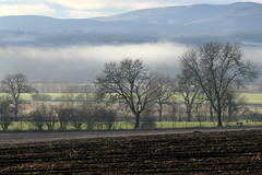 Glendelvine (eric robb niven) Tags: ericrobbniven scotland dundee meikleour mist winter trees cycling springwatch