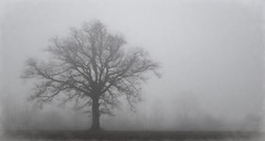 Just a tree in the fog..... (Kevin Povenz) Tags: 2018 december kevinpovenz westmichigan michigan ottawa ottawacounty tree fog foggy