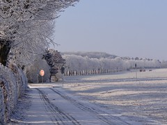 shades of winter (JoannaRB2009) Tags: wilhelmsthal calden hesse hessen germany deutschland landscape view nature path road park fields snow white sunny cold frost tree trees alley avenue lindenalley winter