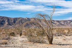untitled (27 of 28).jpg (xen riggs) Tags: desert california joshuatreenationalpark february2018