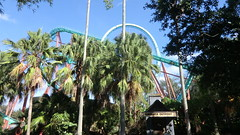 Florida - Tampa:  Busch Gardens Theme Park - Kumba roller coaster (in the back) (Traveller-Reini) Tags: florida floridawestcoast usa usaeast unitedstatesofamerica buschgardens themepark themenpark freizeitpark america amerika northamerica nordamerika palms park fun bluesky rollercoaster attraction urlaubsreise urlaub journey tree bäume outdoor