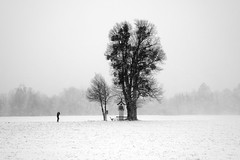 take a seat (.martinjakab) Tags: monochrome blackandwhite schwarzweiss snowscape trees winter person 1 salzburg austria acros weather one wind storm white