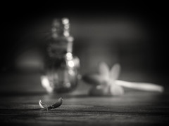 A PART OF ME! (Ageeth van Geest) Tags: blackwhite monochrome blackandwhite bw smileonsaturday onesinglepetal kokus crocus flower petal stilllife