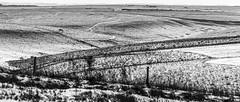 Curves and Features in the Snow (stevedewey2000) Tags: salisburyplain wiltshire blackandwhite monochrome desaturated bw landscape spta snow 2351
