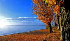 Plage de Préverenges (Diegojack) Tags: vaud suisse préverenges d500 nikon nikonpassion automne couleurs arbres brume léman plage eau feuilles tapis groupenuagesetciel